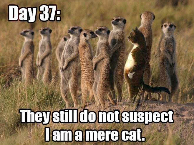 Day 37: They still do not suspect I am a mere cat